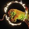 Цирки в Каменск-Шахтинском